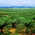 45 Perusahaan CPO Terbesar di Indonesia