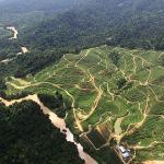 Investor Brunei Siapkan Rp 3 Triliun untuk Take Over Kebun Sawit