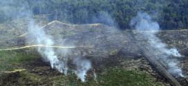 Perusahaan Perkebunan Selalu Jadi Korban dalam Kasus Kebakaran Hutan